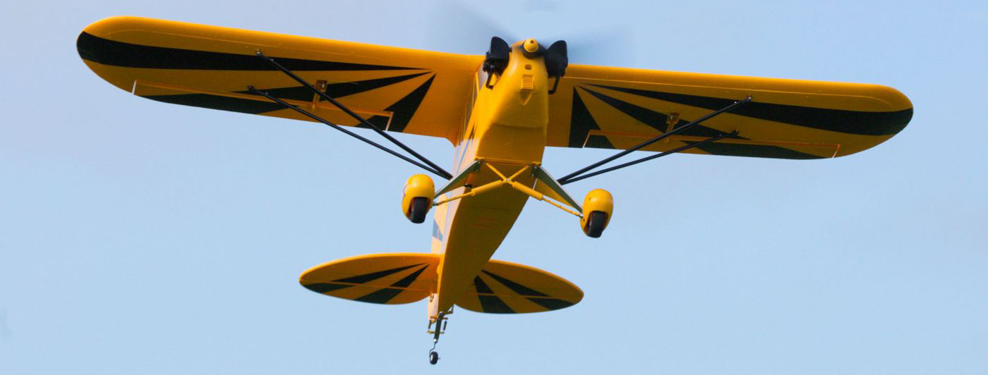 Clipped Wing Cub